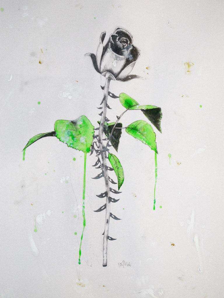 Dark Rose Graphite/Oil Painting/Acrylic 65x50cm 2012